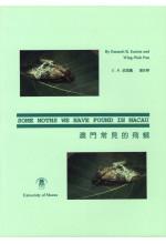 澳門常見的飛蛾 Some Moths We Have Found in Macau